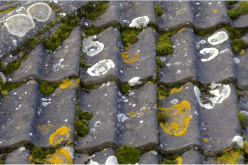 mossy roof tiles close up