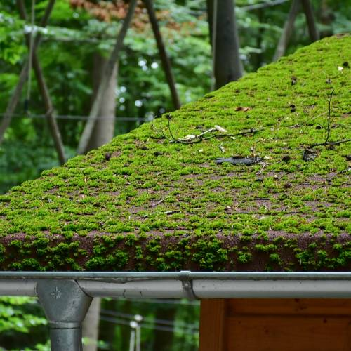 Very, very mossy roof