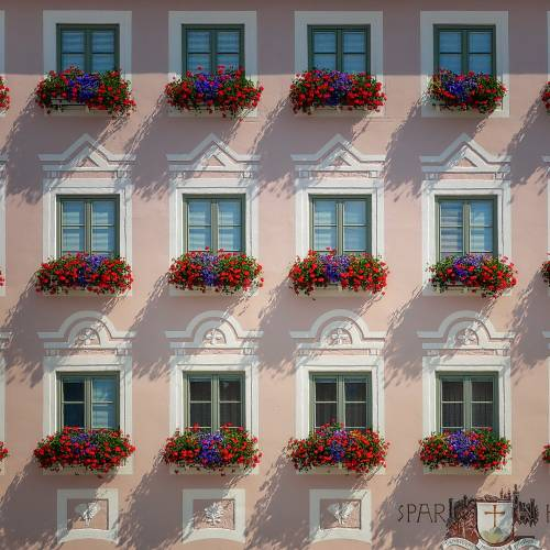 sunlit houses, pink, with vibrant red bloom window boxes